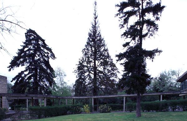 Le parc du raincy - Allee du jardin anglais le raincy ...